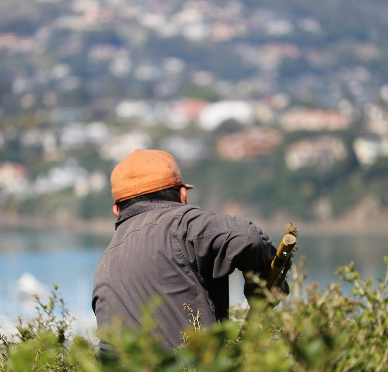 View Pruning in Sausalito